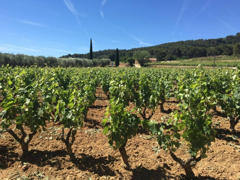 Provence reds know your vintages1
