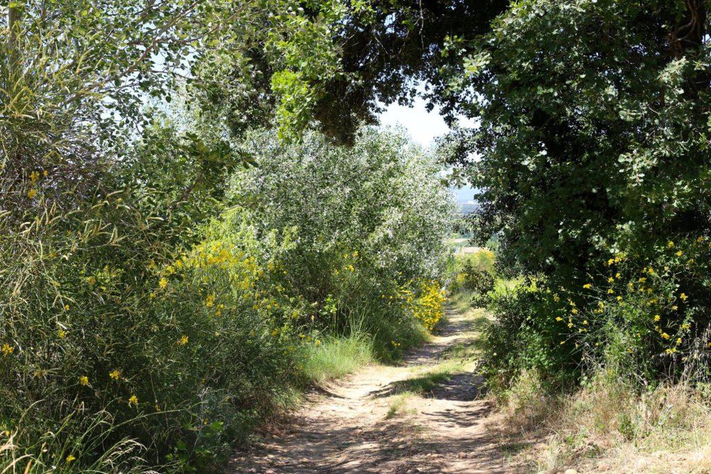 Visit of Domaine de la Vieille Julienne 7