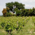 Today's wine: Les 3 Sources Châteauneuf du Pape 2014, Domaine de la Vieille Julienne.