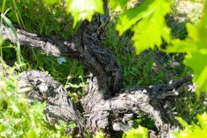 Visit-of-Domaine-de-la-Vieille-Julienne-8-1024x683